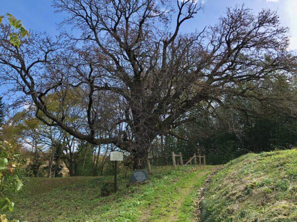 片倉のナシの木 全景