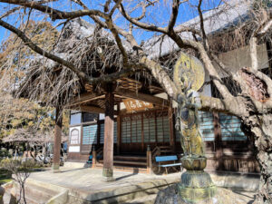 本堂と枝垂れ桜