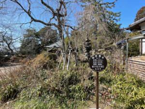 資福寺の七香木蓮