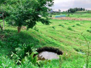 九戸政実 首級清めの池