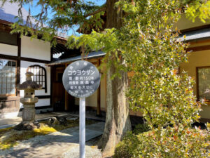 仙台市保存樹木 東昌寺のコウヨウザン