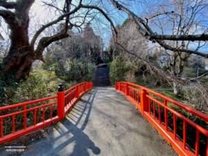 参道に架かる橋と枝垂れ桜