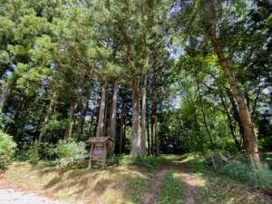 市指定天然記念物 八幡神社の樅ノ木群 入口