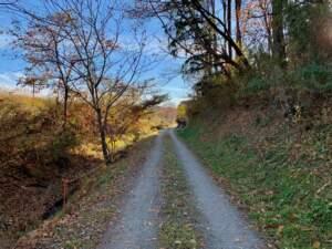 東側の堀と土塁跡