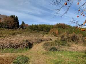 南側の段々畑