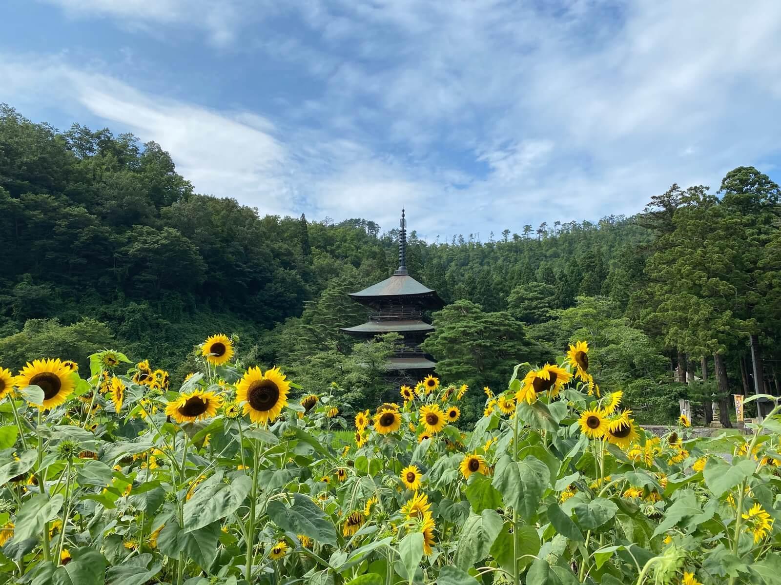 向日葵と三重塔