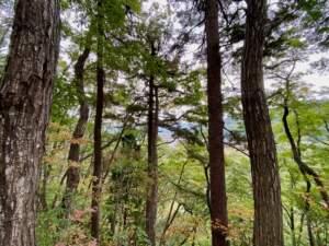 物見台から望む米沢城下