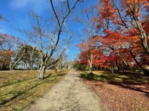 南館跡の遊歩道