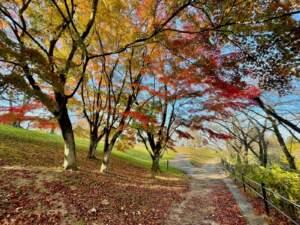 北館東の遊歩道