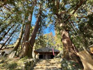 高蔵寺の大杉と阿弥陀堂