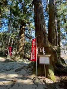 高蔵寺の大杉